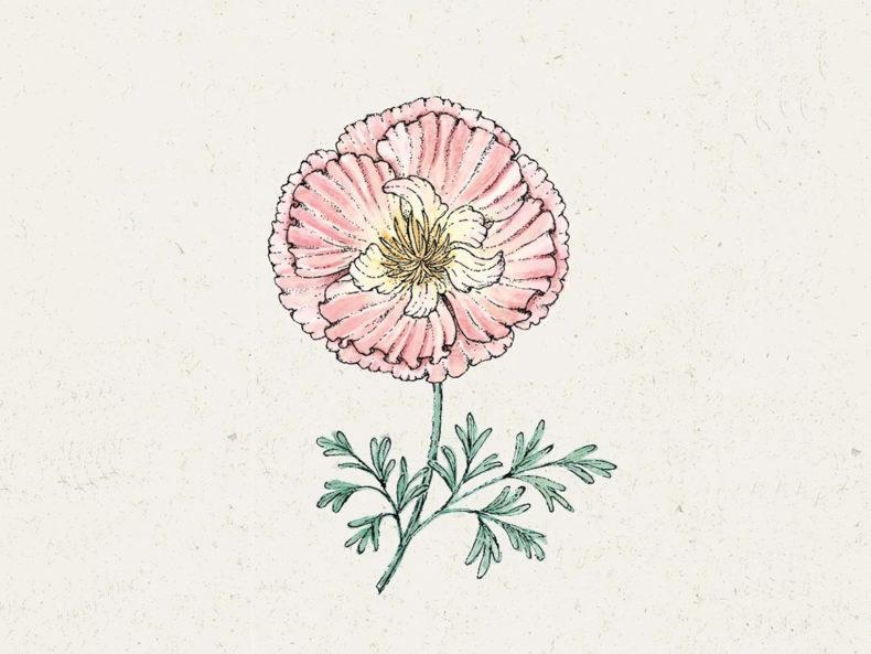 JORA-DAHL-Thai-Silk-Appleblossom-Blumensamen