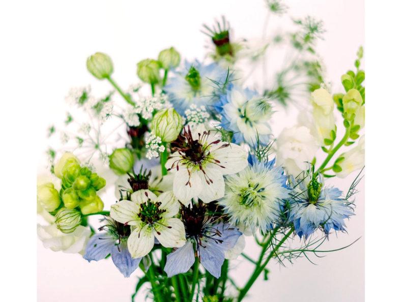 Blumensamen Geschenk Jora Dahl Kollektion