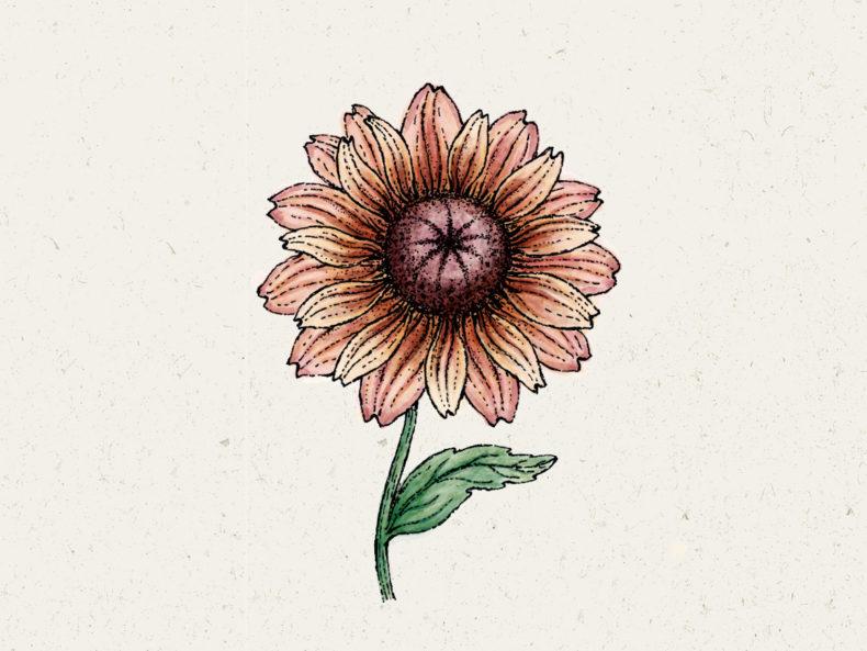 Jora Dahl Blumensamen Sonnenhut