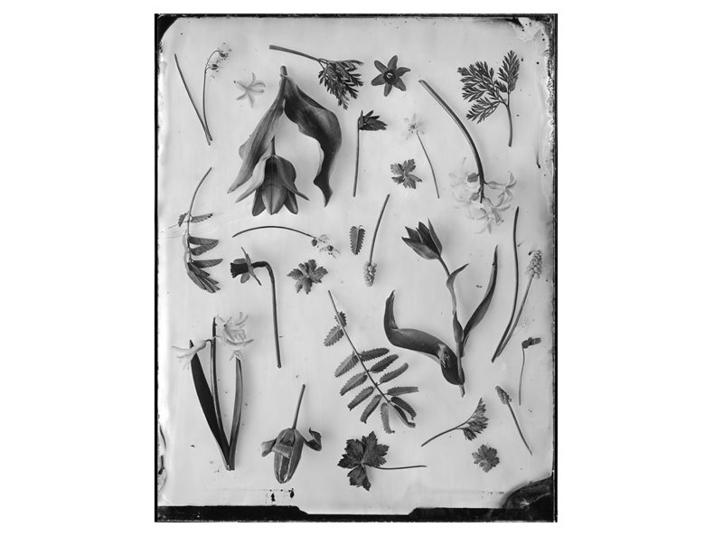OVO-Things-Spring-Garden-Silverprint