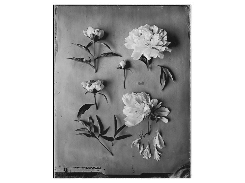 OVO Things Paeonia Silverprint