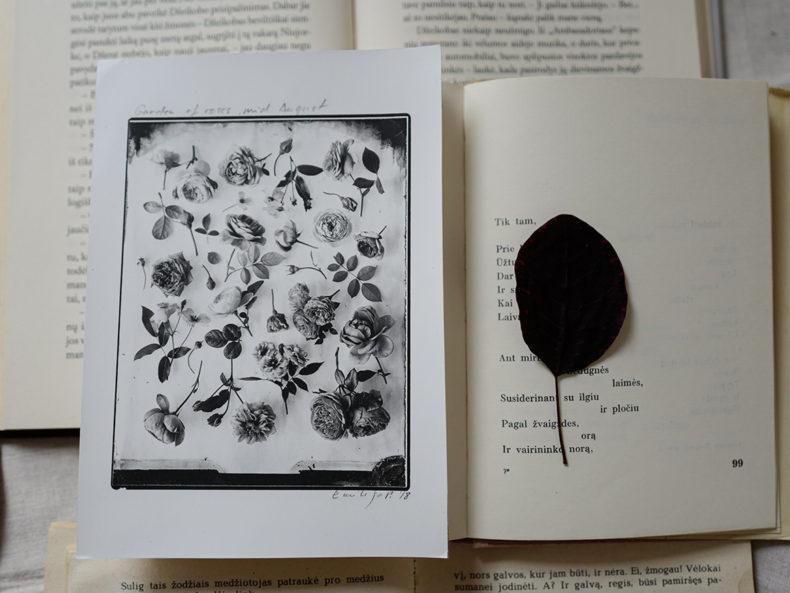 OVO Things Silverprint Rose Garden August