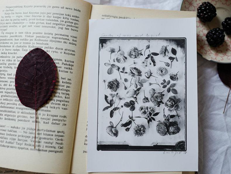OVO-Things-silverprints-Rose-Garden-August
