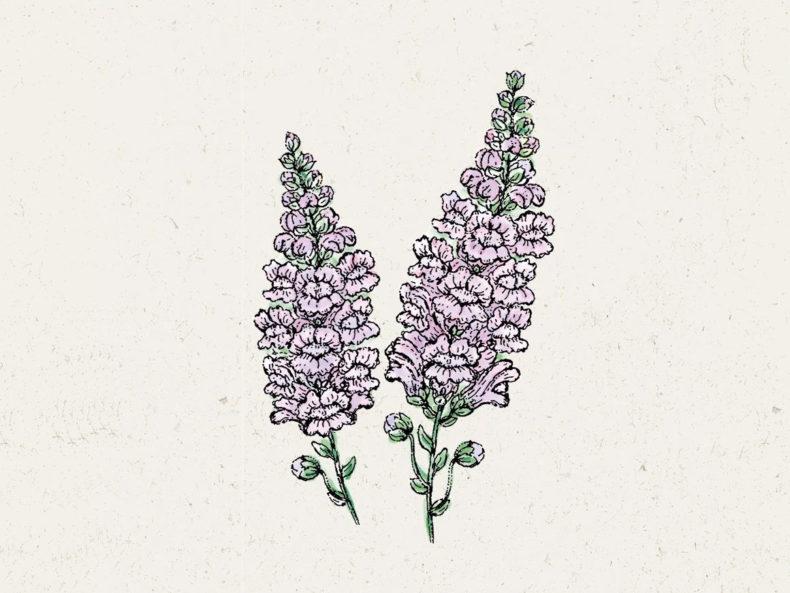 Summer Lavender JORA DAHL