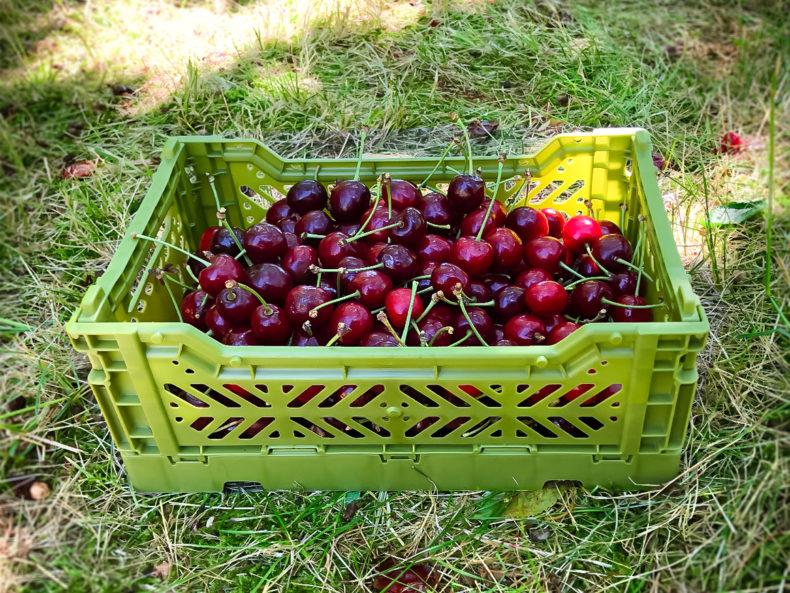 aykasa-aufbewahrungsbox mini olive kirschen